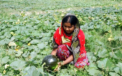 Nayakrishi farmer woman