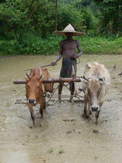 farmars