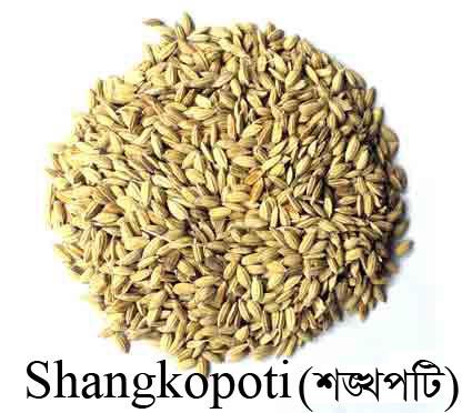 Shangkopoti