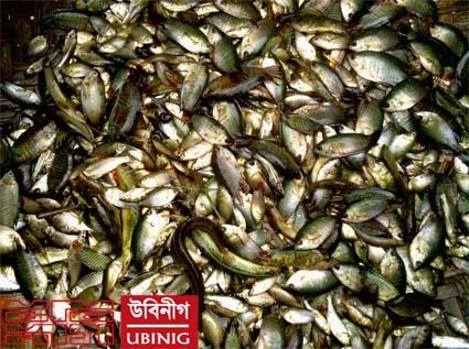 fish tangail
